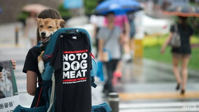 Olympic PyeongChang 2018: Các nhà hàng 'cầy tơ' vẫn hoạt động