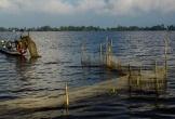 Giăng bắt tôm, cá ngày đêm trên dòng nước lũ ở miền Tây