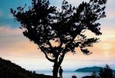 Check-in tọa độ 'cây thông cô đơn' phiên bản đèo Hải Vân đang hot rần rần trong giới trẻ