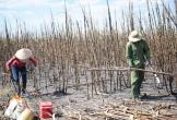 Điều tra nguyên nhân mía cháy hàng loạt ở Đắk Lắk