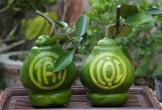 Vườn bưởi khắc chữ lộc, tài giá hàng tỷ đồng