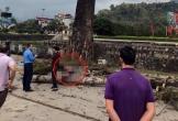 Nam thanh niên đi bộ bị cành cây gạo rơi trúng tử vong