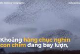 CLIP: Hàng chục nghìn con chim bay lượn trên bầu trời như dải ngân hà