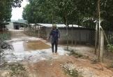 Dịch tả lợn châu Phi lan ra 20 tỉnh, thành phố: Đã tiêu hủy trên 35.000 con lợn