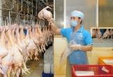 Lợn bị dịch tả châu Phi, giá thịt gà, cá tăng mạnh