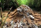 Dân Cần Thơ bức xúc vì chôn heo chết gần khu dân cư