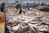 Đầu tư cho ngành Thủy sản thụt lùi nhưng kim ngạch xuất khẩu vẫn tăng trưởng