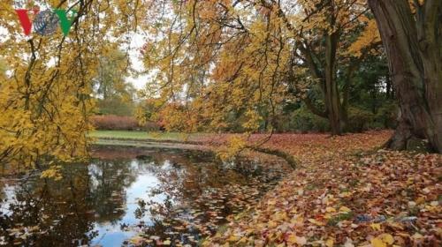 Mùa thu Hà Lan