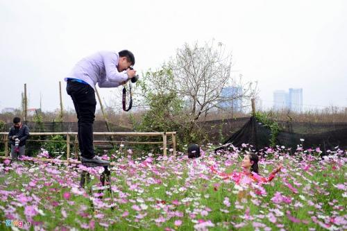 Vườn đào nổi tiếng Hà thành