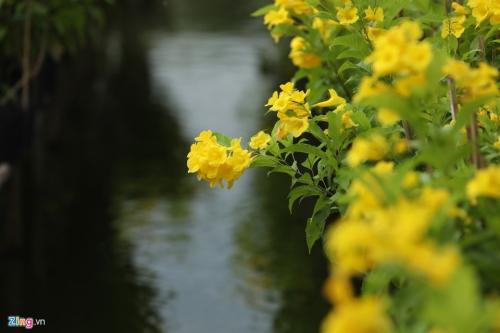 Vương quốc hoa