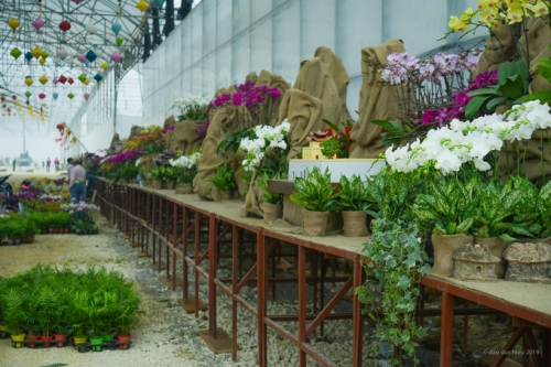 vườn hoa Ninh Bình
