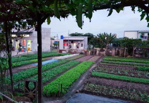 Khu vườn rau Tân Bình